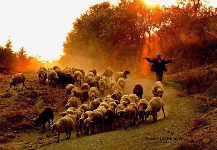 Risale Dersi 932: Kastamonu Lahikası 86